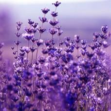 Лаванды цветки, отдушка